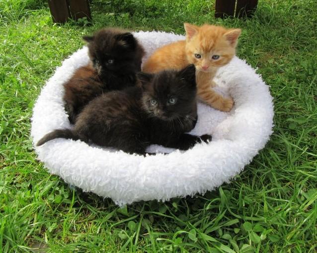 Gina, Tina und Foxi