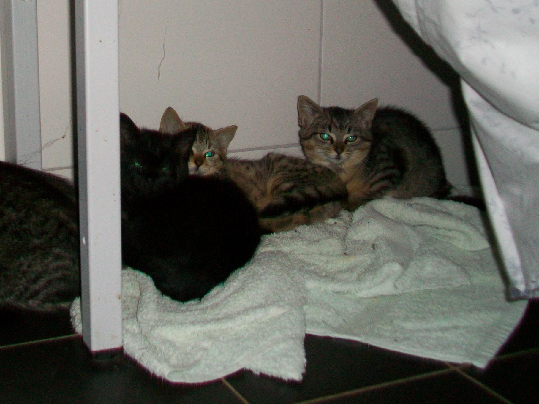 Blacky, Max und Leoni