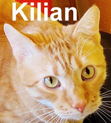 27.3.21 Kilian