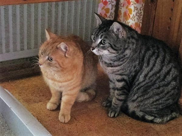 Felix und Moritz