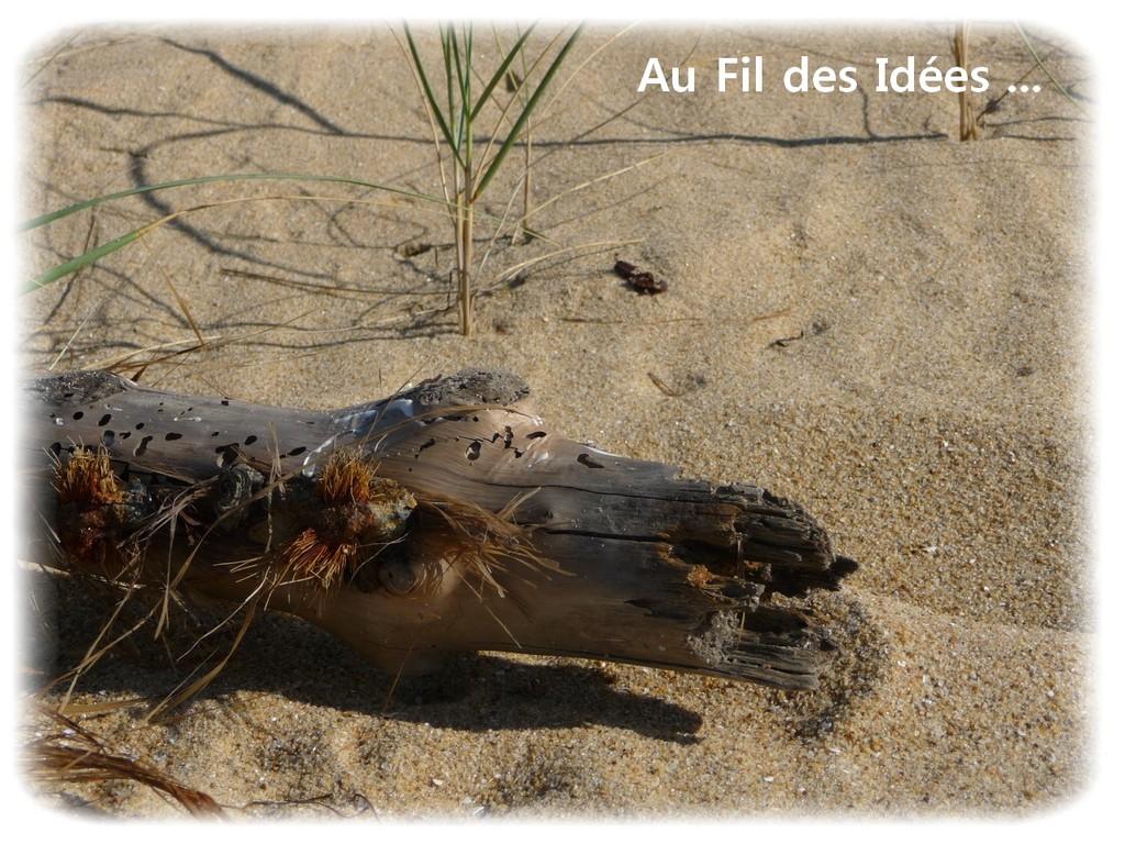 Bois flotté - Plage de la Faute sur mer - Octobre 2011