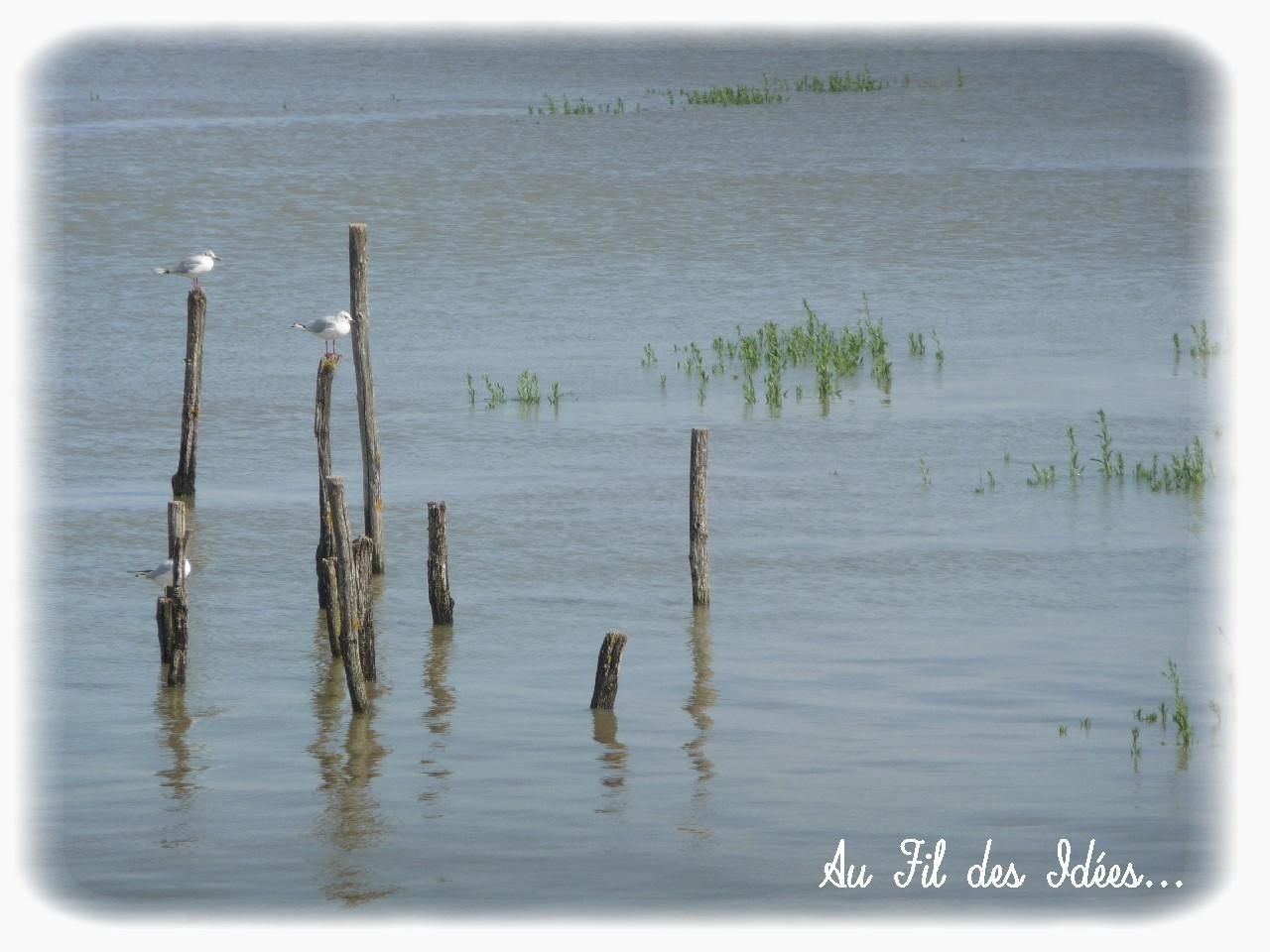 Aiguillon sur Mer - Eté 2012