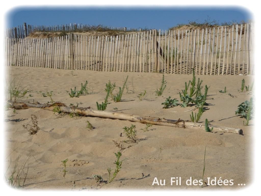 Bois flotté - Pointe de l'Aiguillon (Vendée) - Octobre 2011