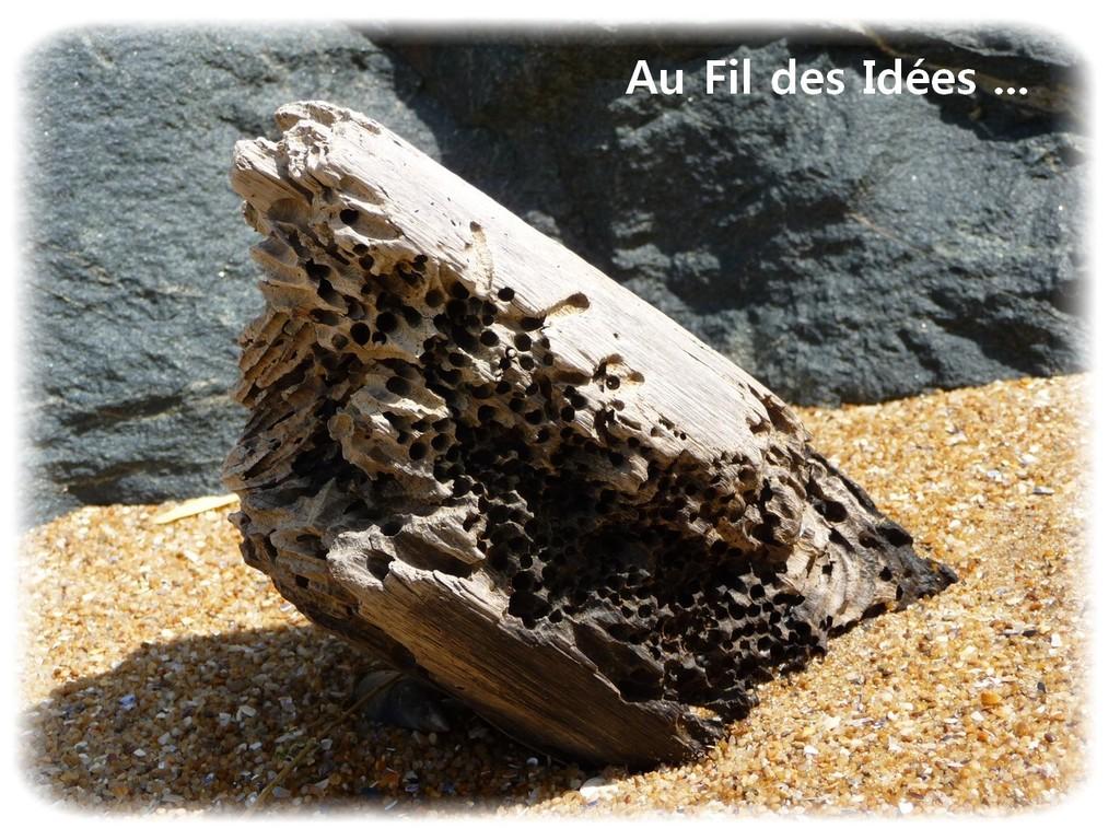 Bois flotté - Pointe de l'Aiguillon (Vendée) - Août 2011