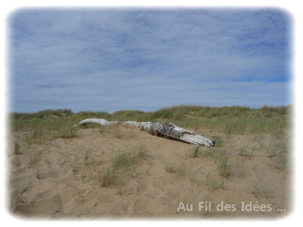 Bois flotté - Plage de la Faute sur mer - Juillet 2010
