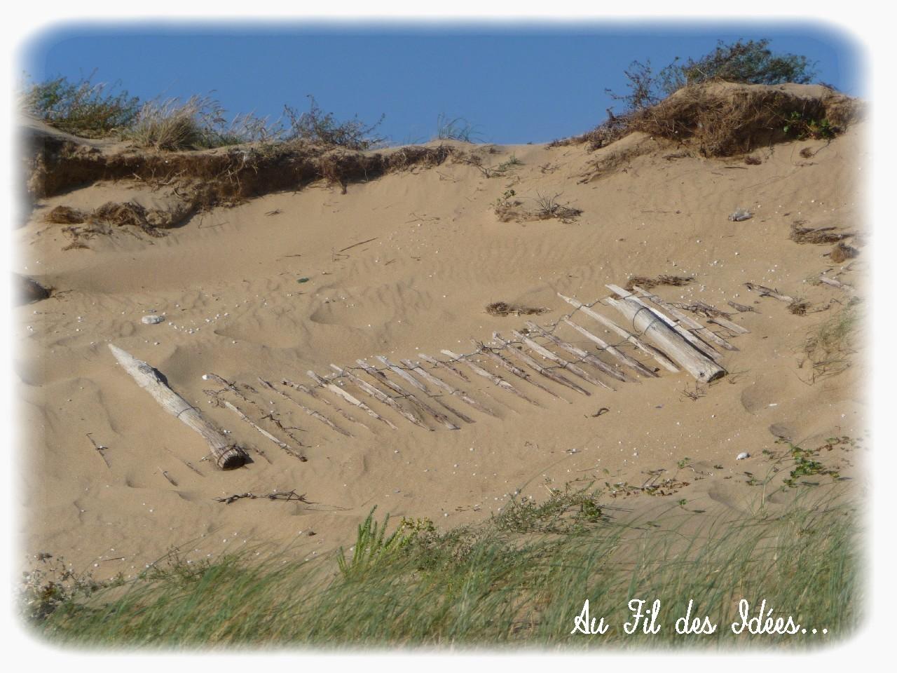 Pointe de l'Aiguillon sur mer - Eté 2012