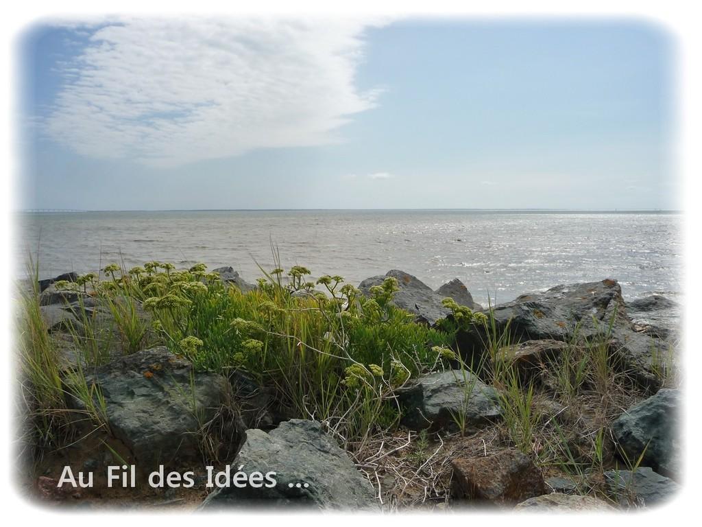 Pointe de l'Aiguillon sur mer (Vendée) Août 2011