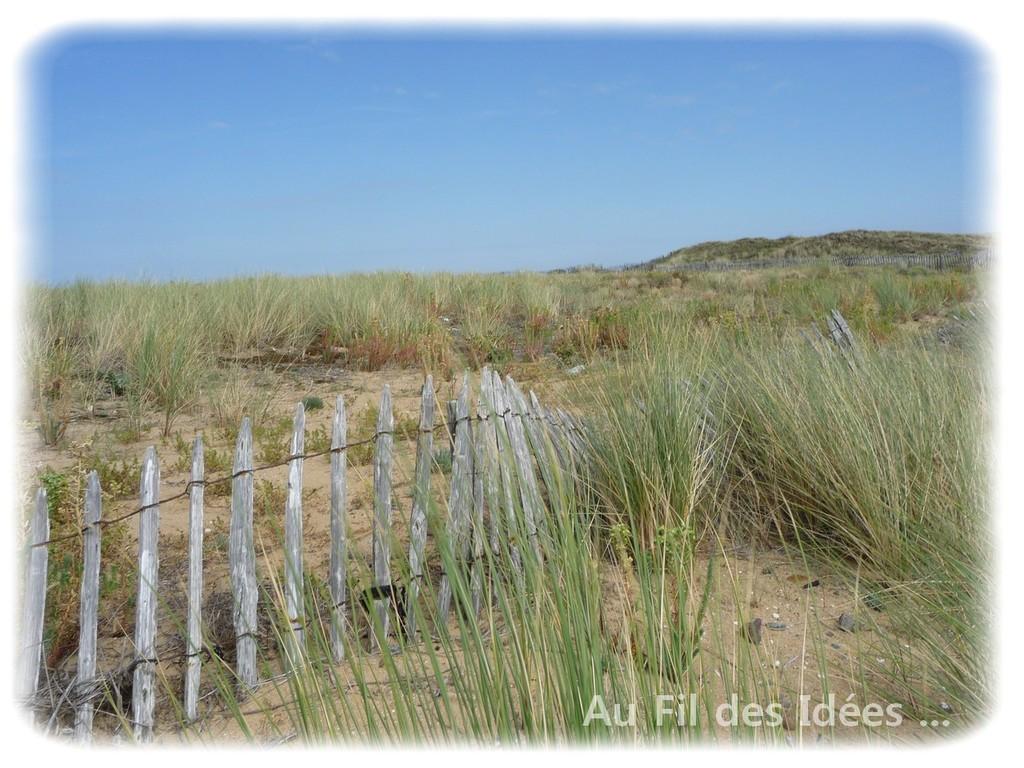 Pointe de l'Aiguillon sur mer - Juillet 2011