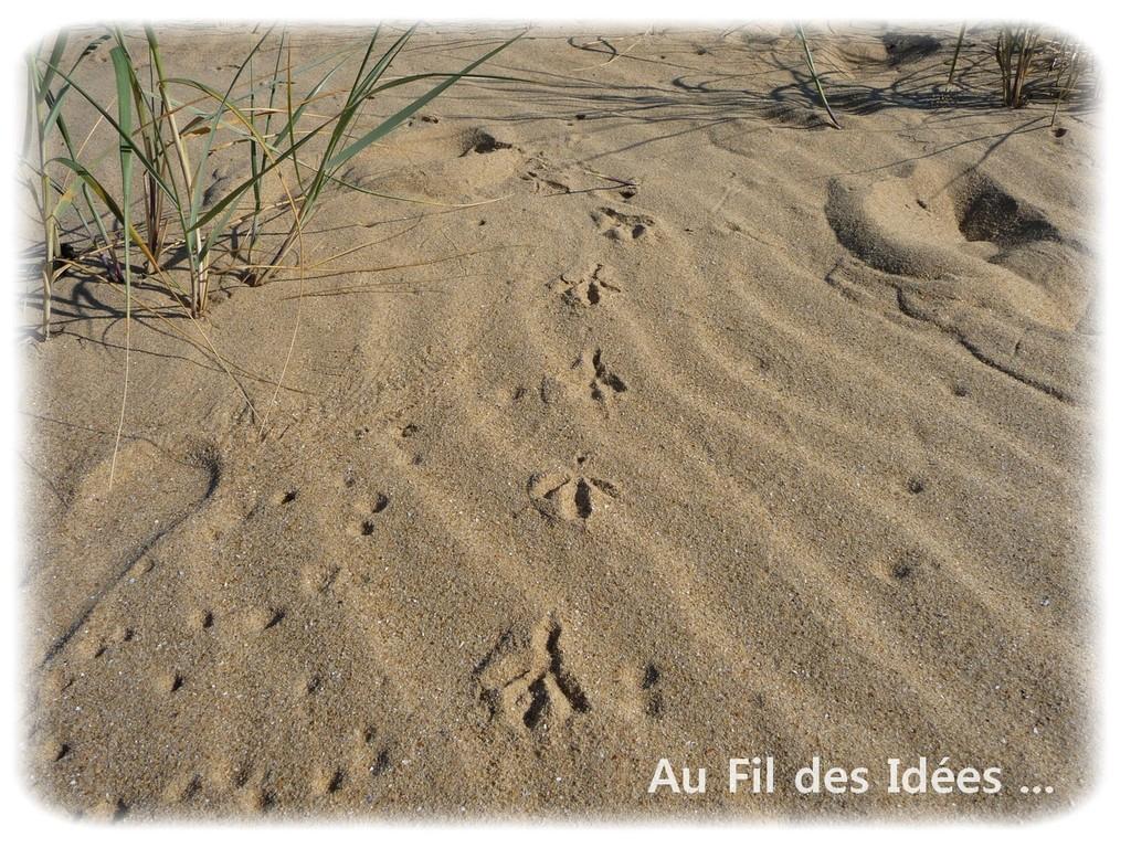 La Faute sur Mer (Vendée) - Octobre 2011