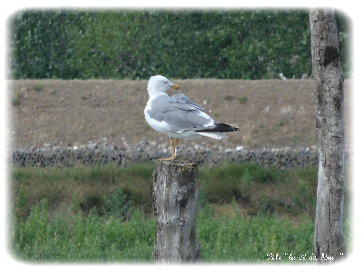 La Faute sur Mer (Vendée) - Eté 2013