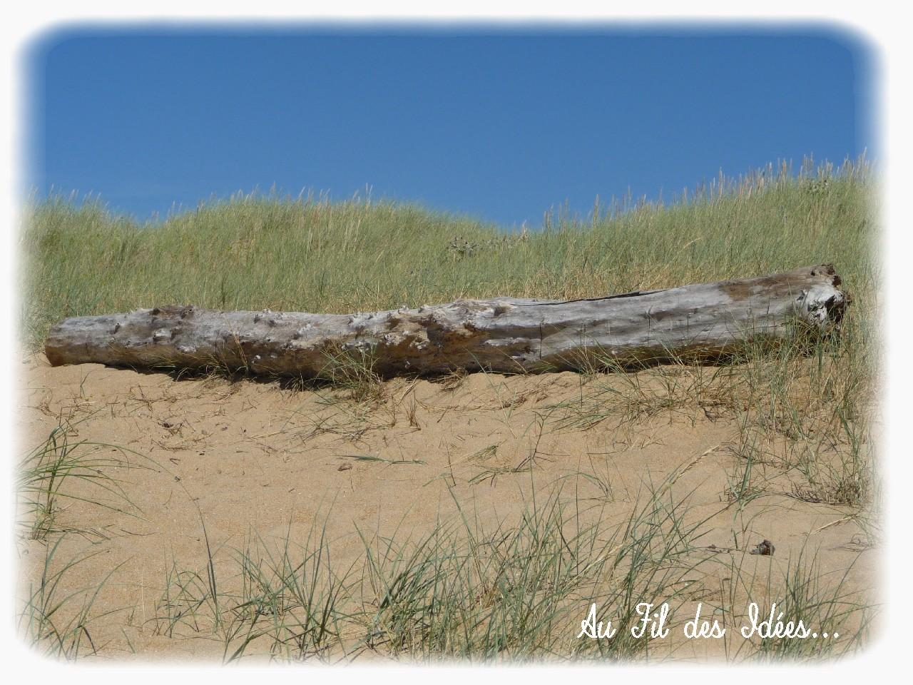 Bois flotté - Plage de la Faute sur mer - Eté 2012