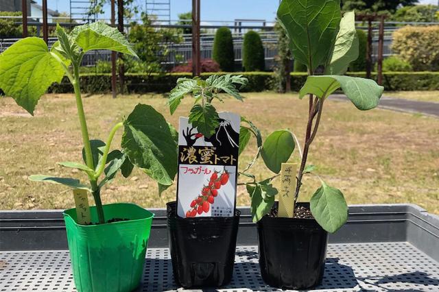 第3話 緊急事態宣言下のゴールデンウィーク。太陽の下で夏野菜を植えつけ!