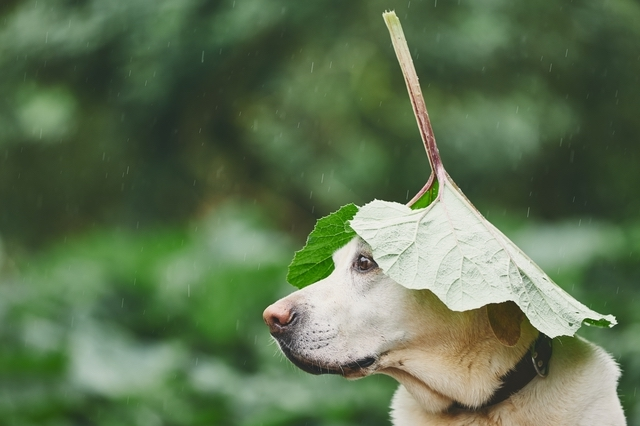 雨はお好きですか?