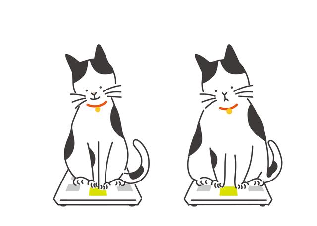 猫の肥満は、体重に加えて肋骨に触れられるか、上から見て腰のくびれがあるかなどで判断します。