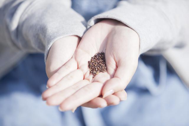 苗から育てても、種から育てても。