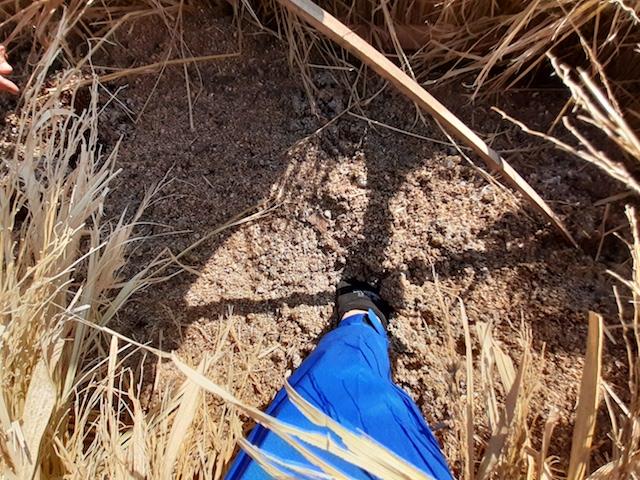 切り返し前のボカシ肥に手をつっこんで温かさを確認。