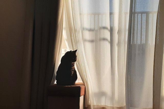 【AND PET】留守番をさせられますか?