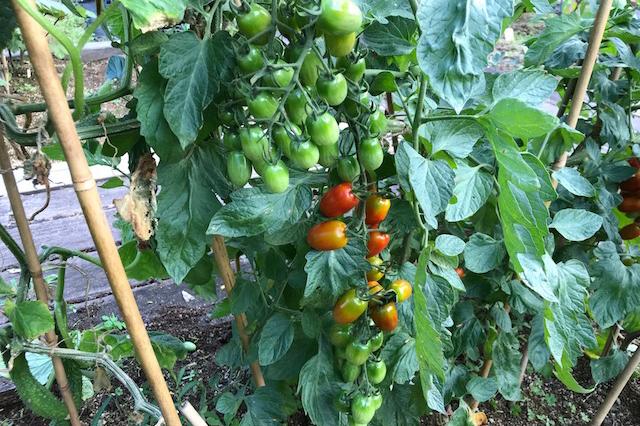 第8話 世田谷区の大平農園に学ぶ、野菜を作る人と食べる人が支え合うしくみ