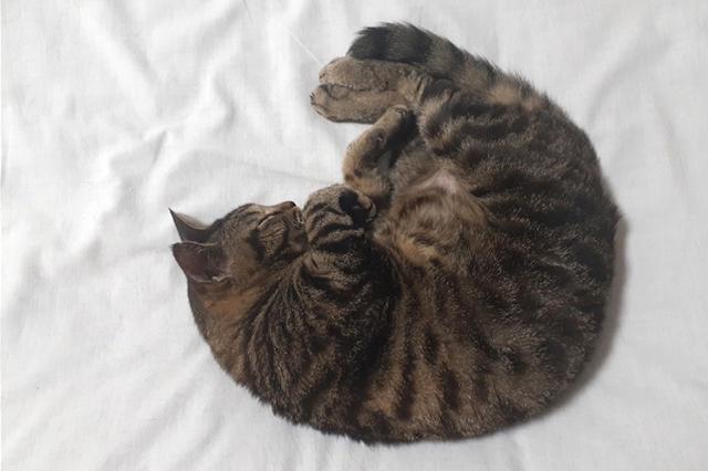 【AND PET】いびきをかきますか?