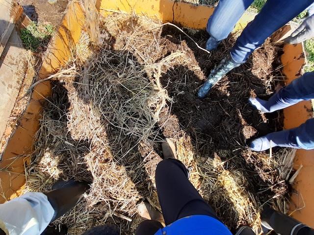 堆肥枠の中に何人も入ってギュウギュウに踏み固める。