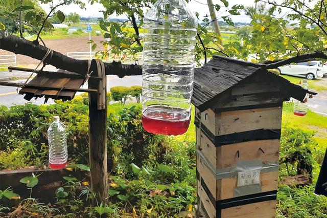 第11話 夏のミツバチはいろいろ大変!