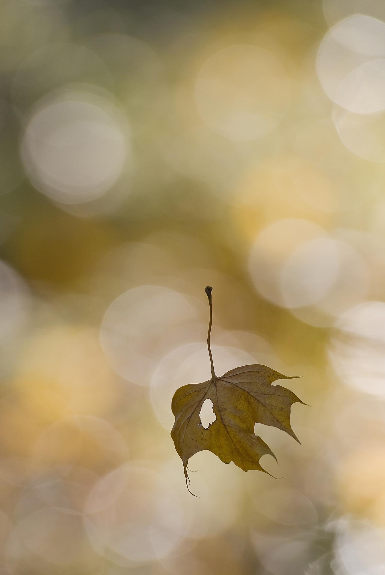 Feuille d'automne_Slonina Jean