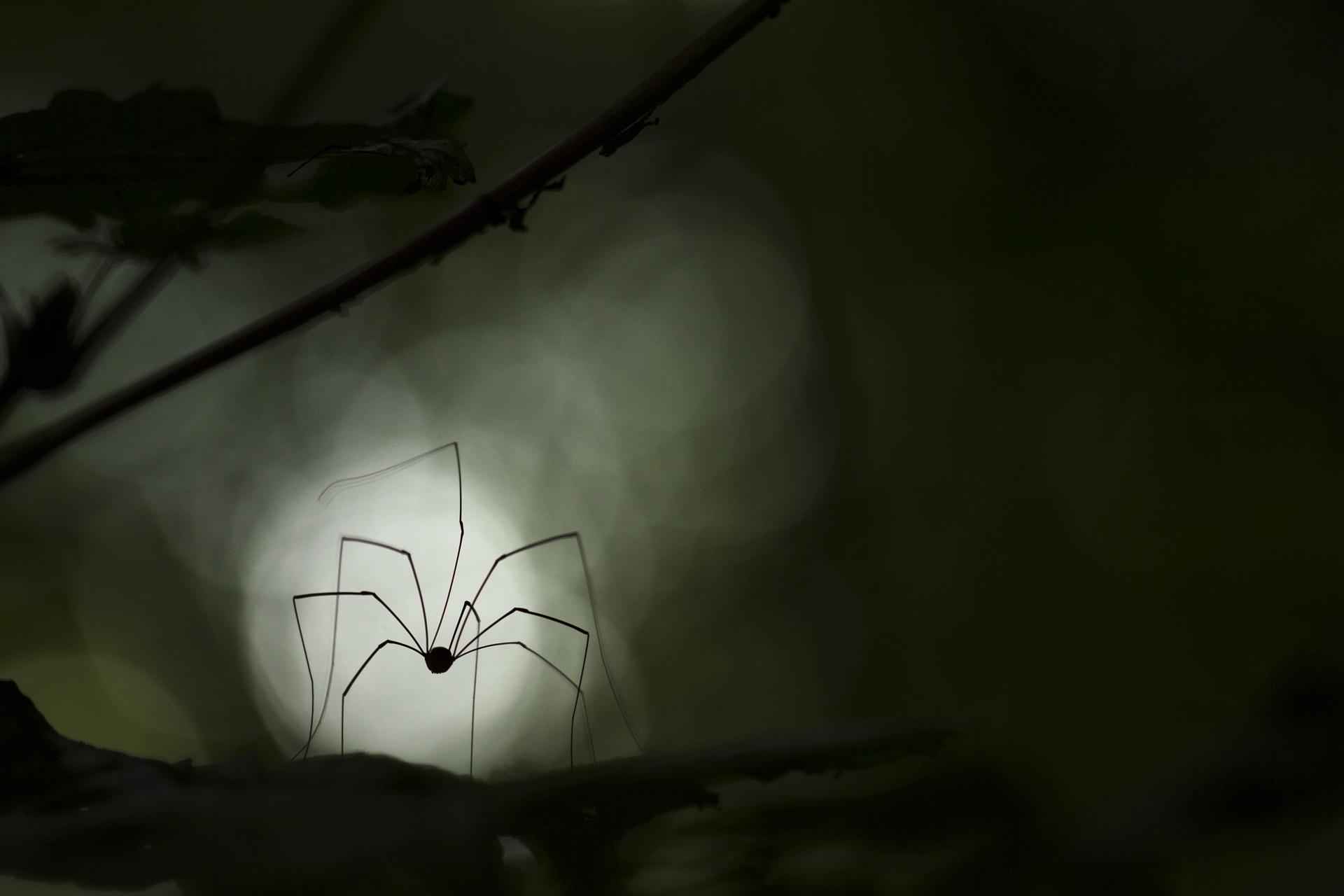 L'araignée_Descamps Romain