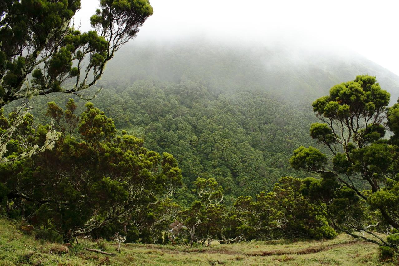 Paysage brumeux de la randonnée des Fajas - Eté 2013 © Florian Bernier