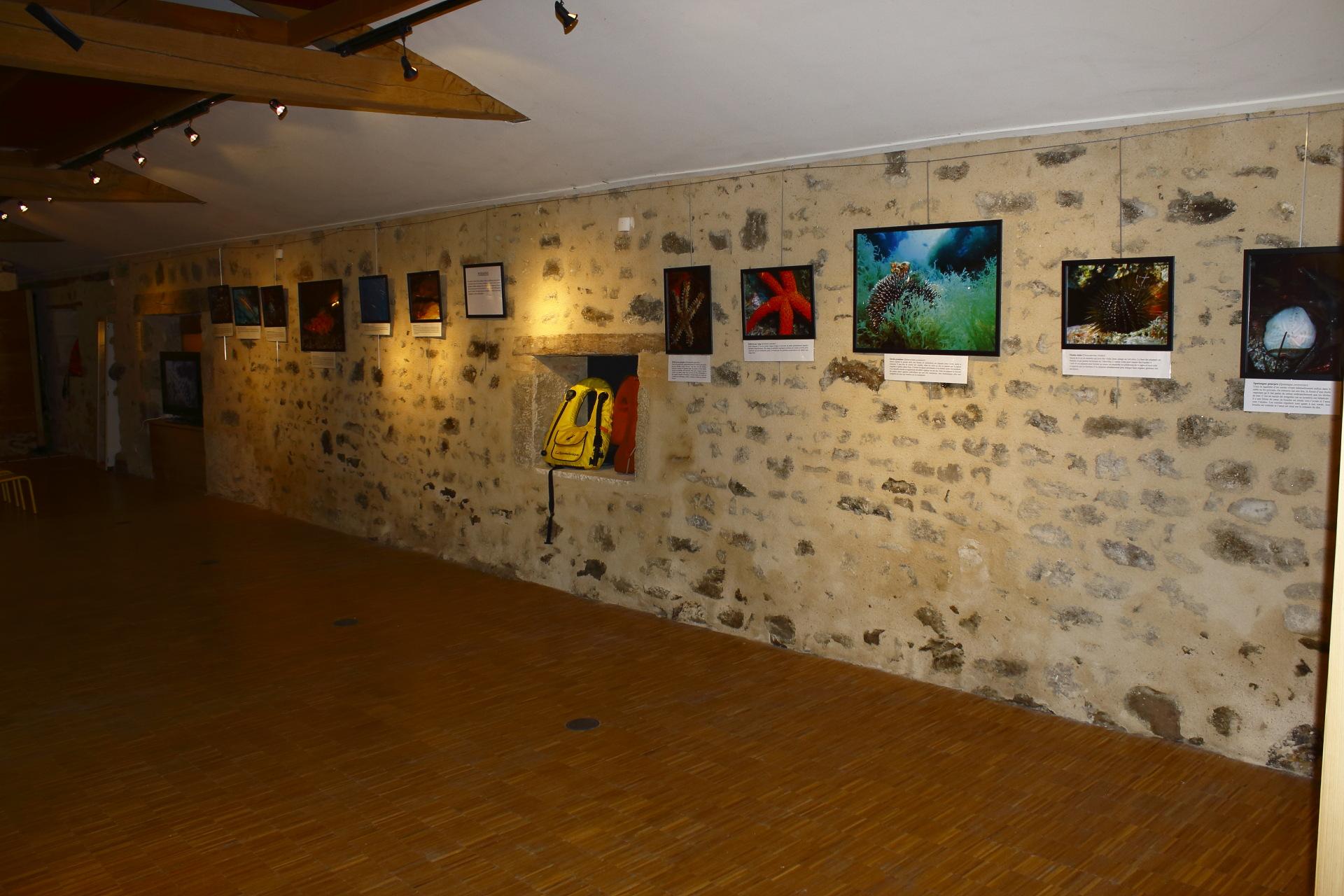 Mur des Echinodermes © Oct16 - Florian Bernier