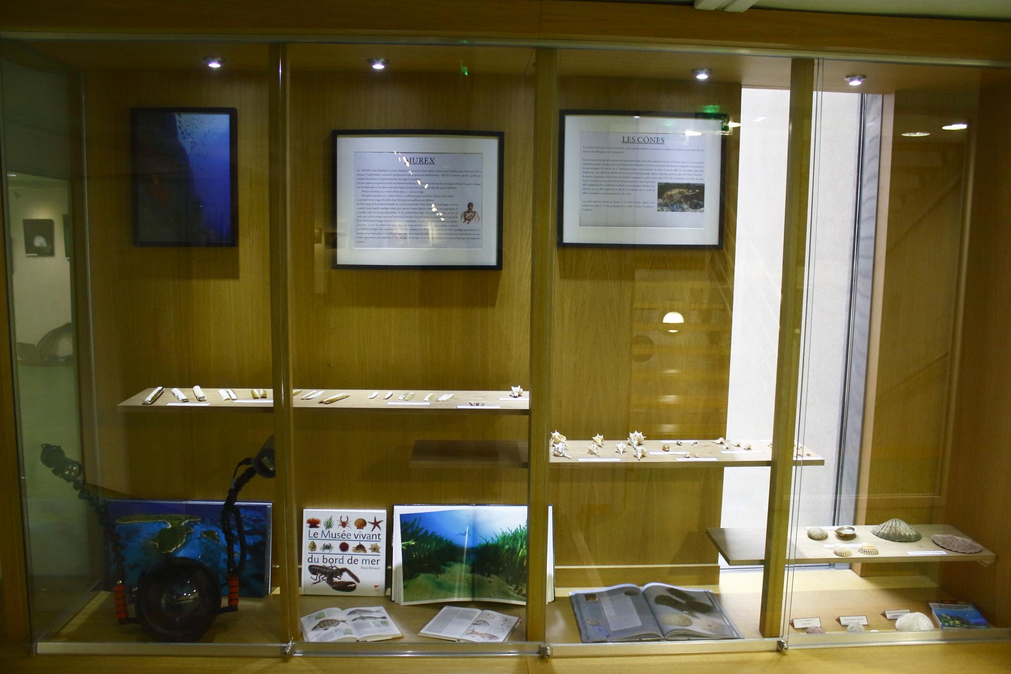 Vitrine des coquillages du Muséum d'Histoire Naturelle de Dijon - Caisson et livres personnels © Florian Bernier
