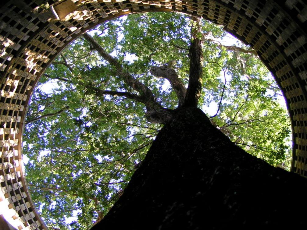 Alliance du végétal et du minéral, le Chêne du Pigeonnier de Pouzay à Béceleuf me fascine d'autant plus qu'il a vu naître mes grands-parents dans les fermes du village. © Florian Bernier - Mai 2012