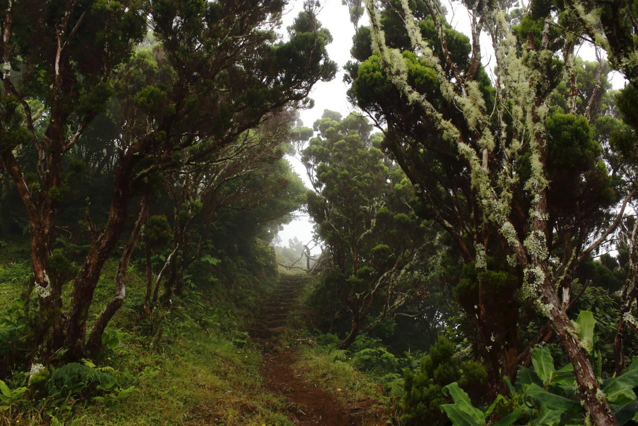 Passage dans les sous-bois d'Ericacées - Eté 2013 © Florian Bernier