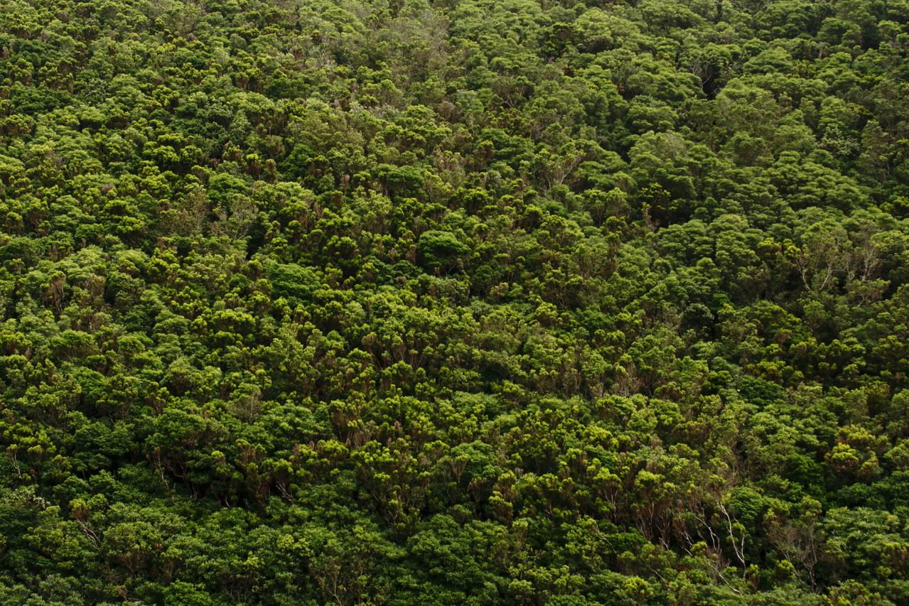 Flanc de vallée complètement couvert de végétation - Eté 2013 © Florian Bernier