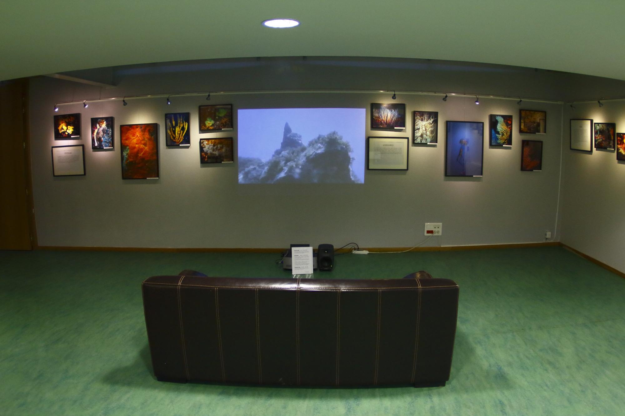 Eponges et Cnidaires séparés par la projection de mes films © Florian Bernier