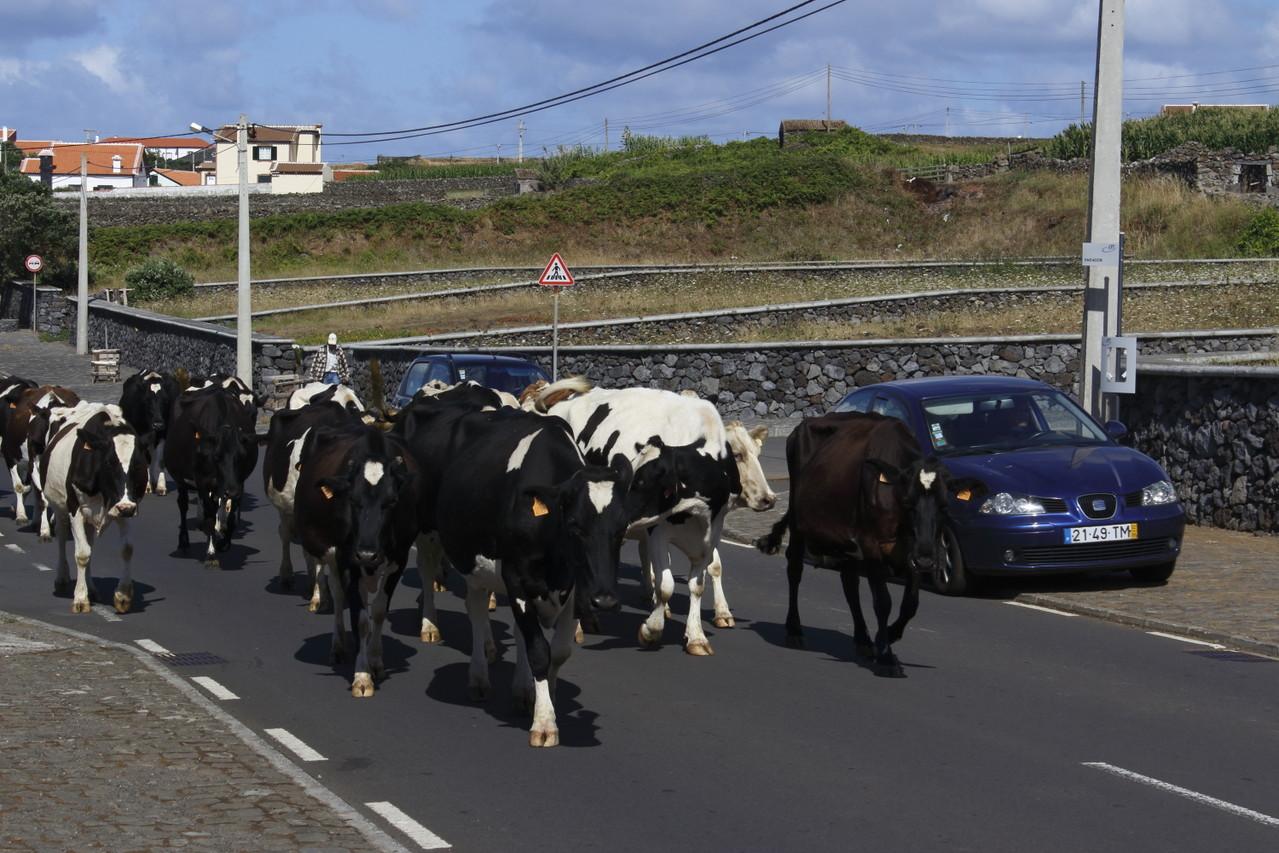 Une bonne surprise sur la route de Terceira - 01aout13 @ Florian Bernier