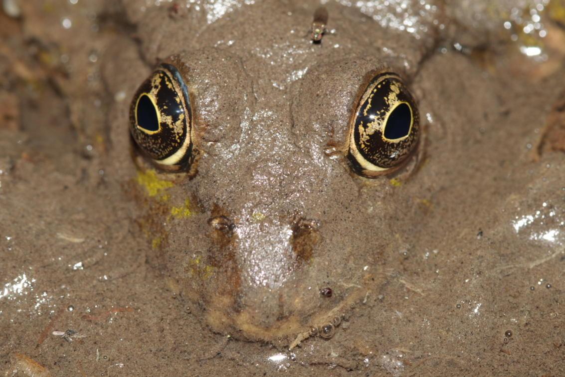 Un monstre de boue aux grands yeux hypnotiques gardait un petit lavoir prêt de chez moi, il a fallu s'approcher prudemment pour ne pas se faire dévorer... © Florian Bernier - Mars 2011