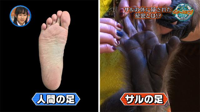 神奈川(川崎)で猿が出現!3県渡り歩く丈夫な足