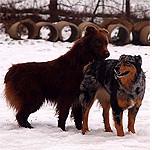 Ginger & Teddy