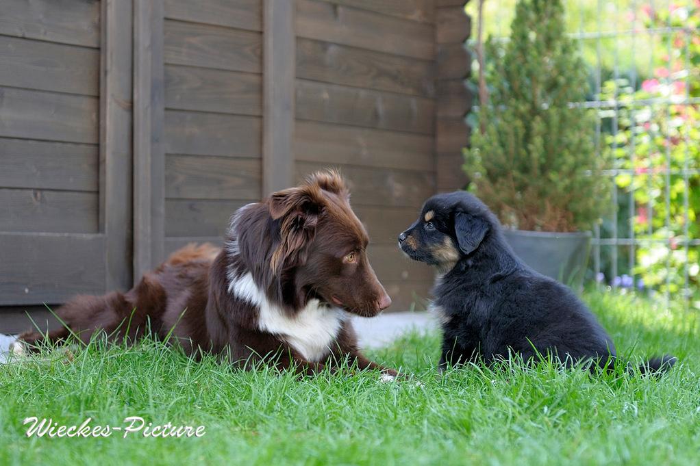 Pepper und Chaya