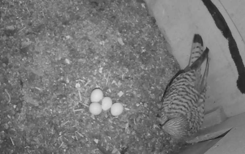 4 Eier sind endlich gelegt