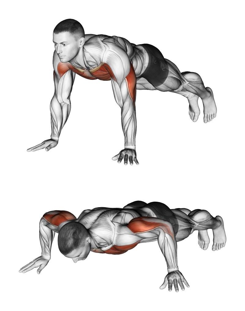 Piegamenti e massa muscolare