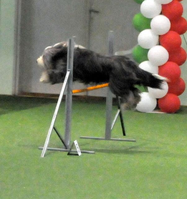 Junior Championship 2009 Ungarn