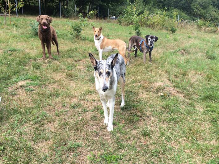 Cleo, Holly, Rocky, Smeik, Luni und Cora