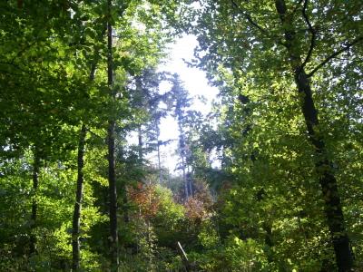 Waldkindergarten Umgebung