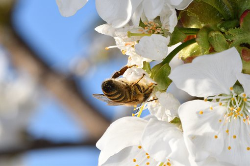 Nachhaltigkeit im Apfelgarten