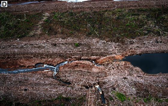 違法伐採による泥炭湿地の破壊 by Wetlands Inter Indonesia Program