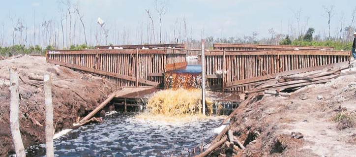 Wetlands Inter Indonesia Programによる運河・泥炭地保全活動
