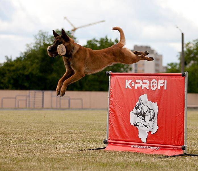 K9-Profi.com dog training equipment