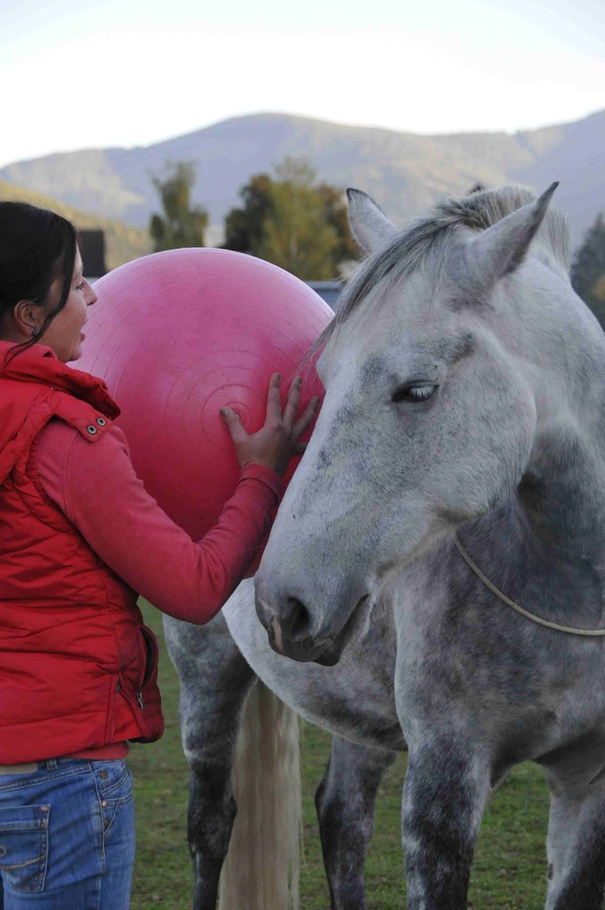 TrickyHorse Natural Horsemanship Unterricht