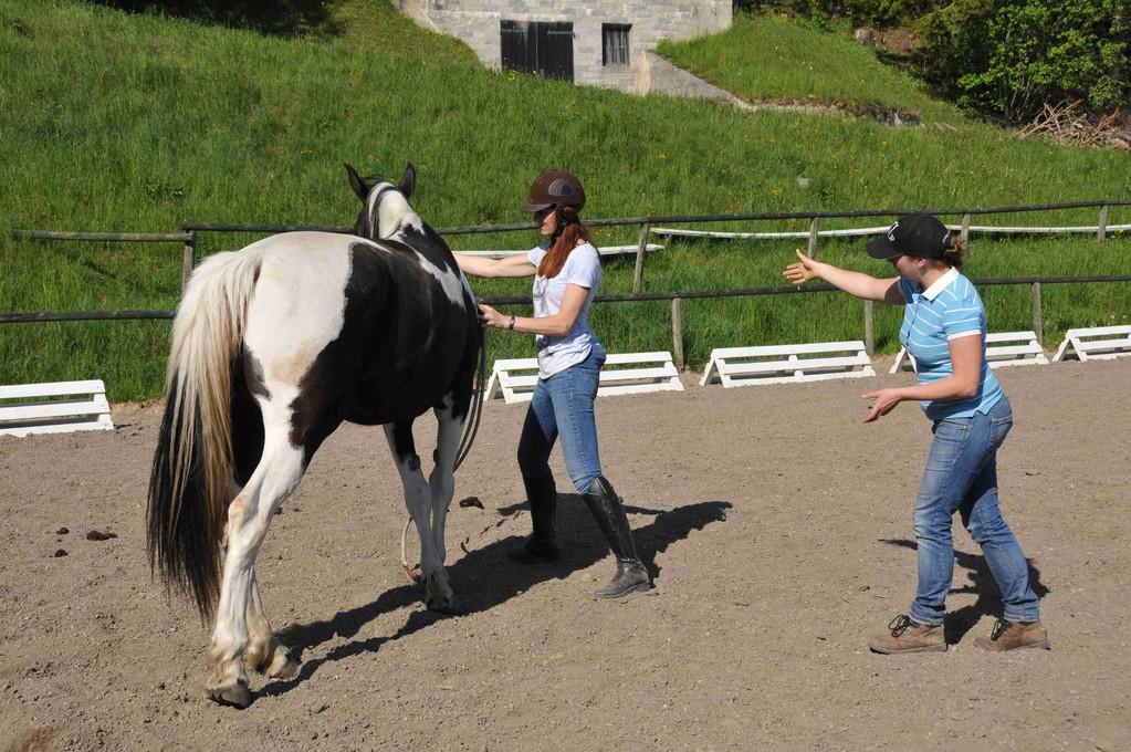Pferdetrtaining